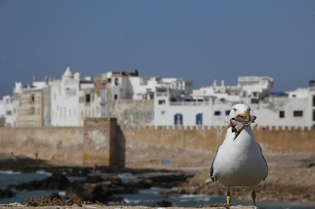 【モロッコ】エッサウィラ観光に絶対行くべき6つの魅力