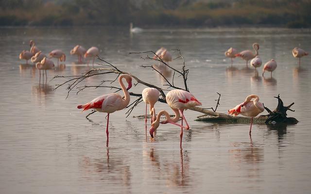 【フランス】ピンクの塩田!フラミンゴの生息地カマルグに行ってきた。