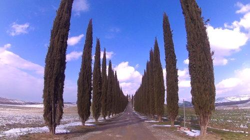 【イタリア】トスカーナ州のオルチャ渓谷の景色が圧巻だった!