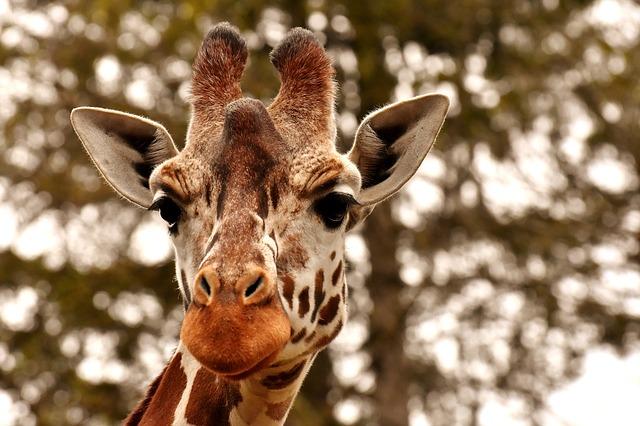 【チェコ】世界で5番目に人気のプラハ動物園は本当に楽園だった!